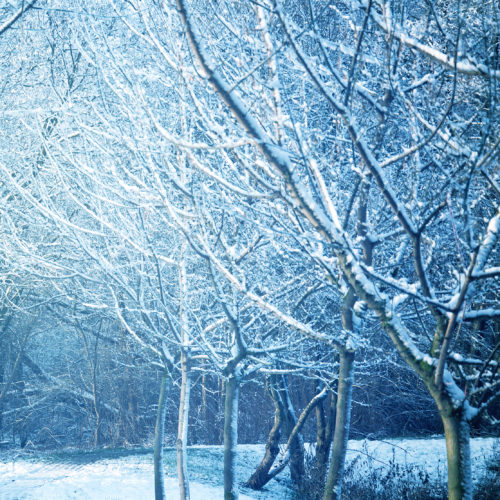 Winter and snow conceptual image. Park with trees covered with snow.